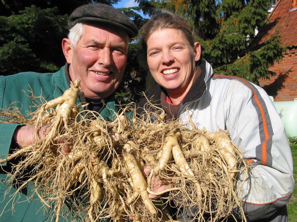 Harvesting panax