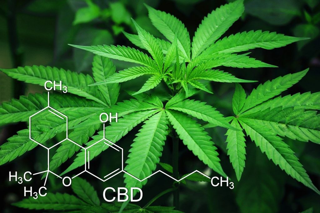 The origins of CBD