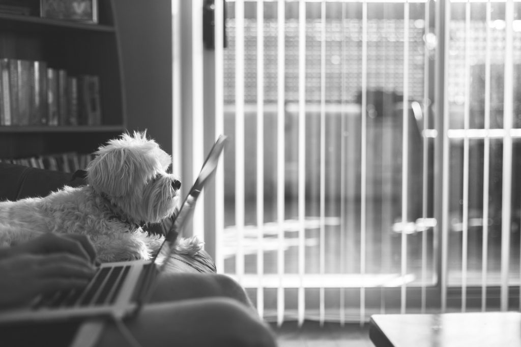 Tips for Bringing Your Dog to Work